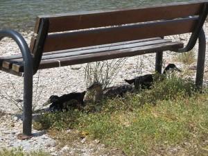 12 auch Enten brauchen einen Schatten