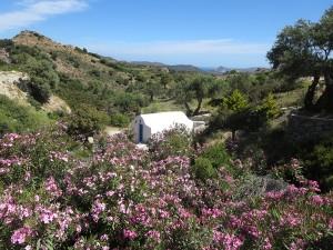 27 Milos - idyllisches Fleckchen