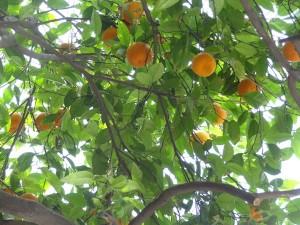 33 Limni Orangen