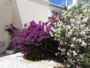 52 zwischen den Häusern immer wieder Blüten