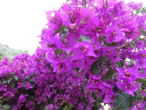 61 Trikeri Blumenpracht