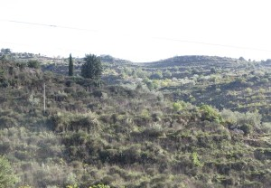 80 Landschaft pur