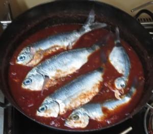frische Fische in Tomatensoße