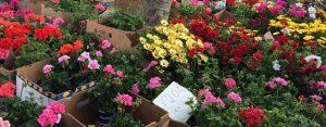 11 auch Blumen gibt es auf dem Erdbeerfest