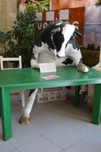 016 und wieder eine Kuh