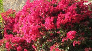 65 und immer wieder Blumen