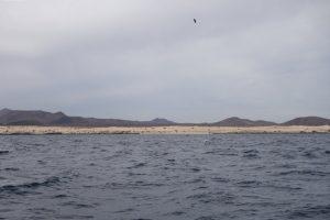 001 Sandwüste bei Corralejo