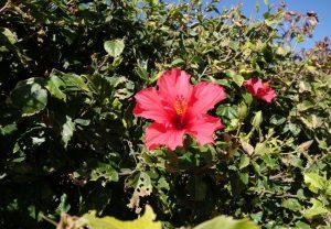 106 Blumenpracht im Januar