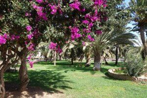 15 Park in Gran Tarajal